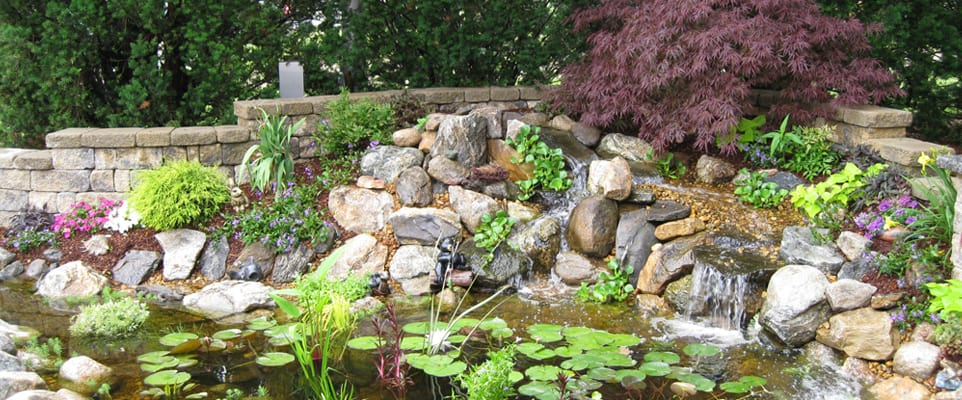 Koi Pond with waterfall in full bloom